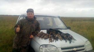 Охота на куропатку с курцхааром видео