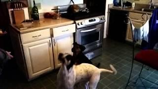Dogs Catching Treats