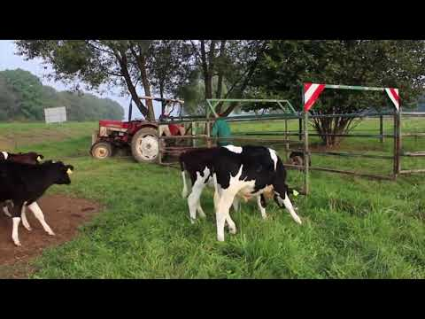 Intelligent Technology Smart Farming Automatic Cow Milking Tractor Field Machine