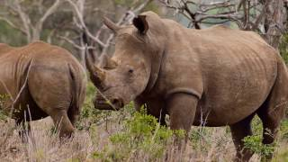 Cycle Life Rides Rhinos