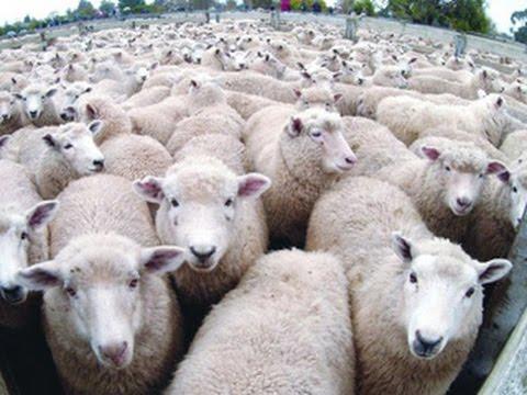 خرفان حقيقية تشارك بمظاهرة للإخوان فى 11/11 - YouTube