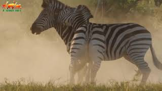 Africa's Deadliest  Young Blood   FULL HD   Documentary Films on Amazing Animals TV