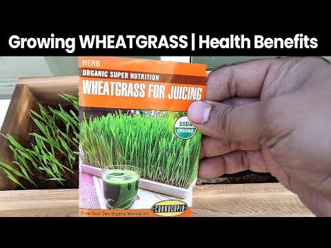 Health Benefits & Wheat Grass