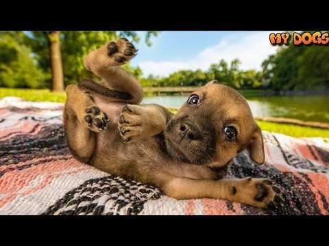 TOP BEST DOG PHOTOs Of 2018 For You All the FEELs [HD]★2018