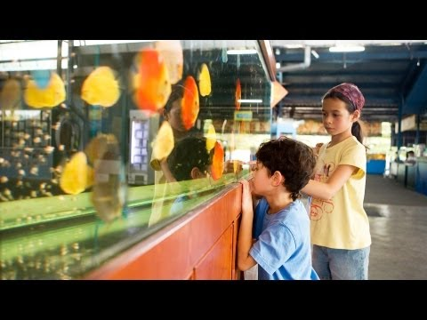 Cost of Maintaining a Fish Tank | Aquarium Care