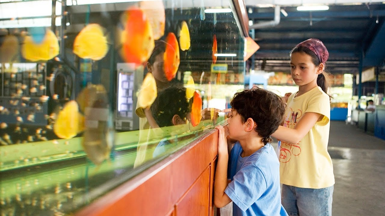 Fish tank electricity cost - Cost Of Maintaining A Fish Tank Aquarium Care
