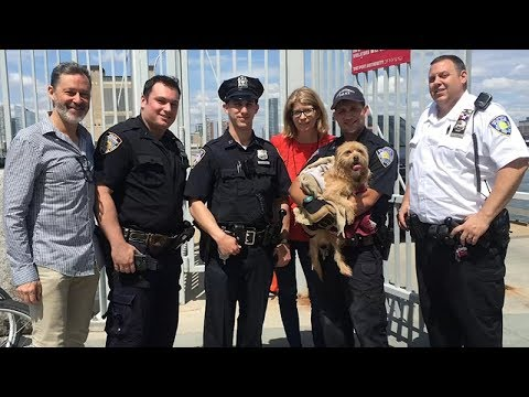 Dog rescued after jumping into Hudson River