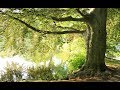 The hidden secret of the big trees on earth