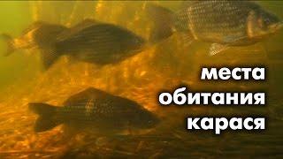 видео В озере водятся караси окуни и щуки. два рыбака поймали 70 рыб