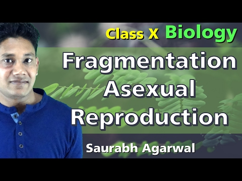 Fragmentation Asexual Reproduction - Class 10 Biology - (Hindi /Urdu)