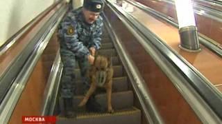 Вести Собаки добираются до мясокомбината на метро