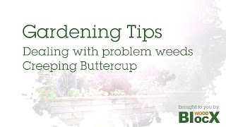 Gardening Tips - Dealing with Problem Weeds - Creeping Buttercup
