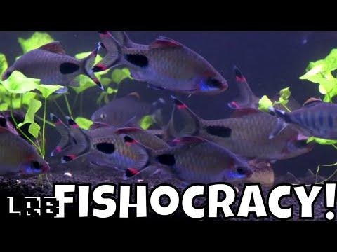 Killifish Wars Fishocracy: A Community Aquarium Fish Experience Ep 8