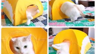 спальный домик для кошки своими руками выкройка