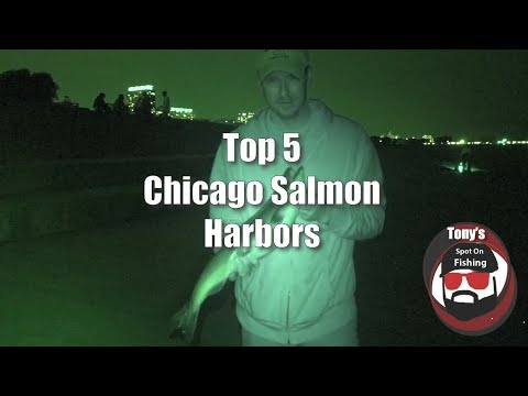 TOP 5 Chicago Harbors King Salmon