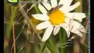 Охрана природы(Учебное видео для вставки на сайт