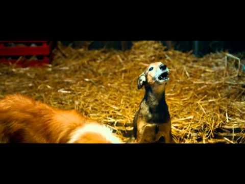 Супер Бобровы (2016) — трейлер