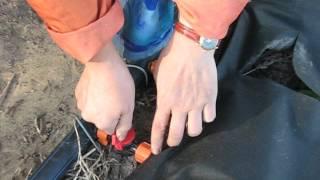 Капельный полив для клубники своими руками.
