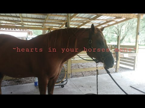 ~hearts in your horses mane~
