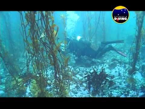 Patagonia Diving