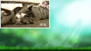 おしゃれイズム 2016年10月16日 161016 内容:沢村一樹がゲストで登場!...