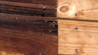 Осиное гнездо! Кусочек дня из жизни ос! Как осы вентилируют свое жилье!
