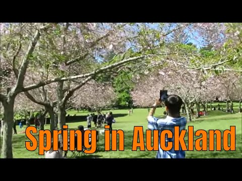 Auckland Travel Guide, The Spring Impression