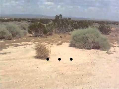 Paja en la hierba - 5 6