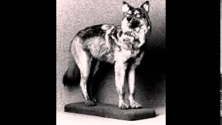 Вымершие животные 20 века