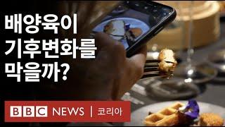 '인공고기' 배양육, 얼마나 승산 있을까 - BBC N…