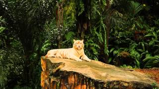 Nhớ rừng, Thơ Thế Lữ -  Khanh Pham Diễn ngâm ( Giọng Nam )