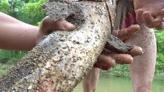 Survival Skills: Primitive fishing catch big fish underground -  Find food meet girl and catfish