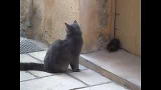 Briga de Gato e Rato, a mais recente! fight of cat and mouse