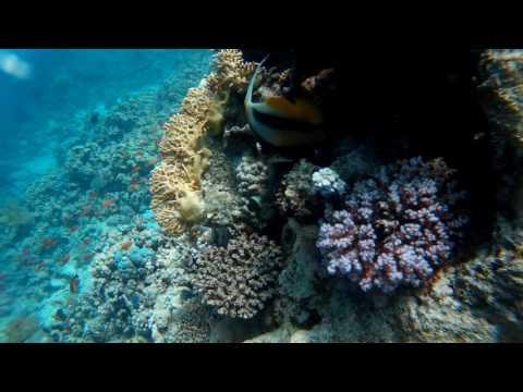 Treasuries of Red Sea: Diving @ Ras Bob (Sharm El Sheikh)