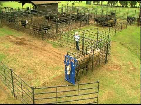 Priefert Small Cattle Working Systems