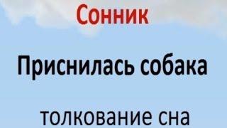 видео Толкование сна Белая сова в сонниках