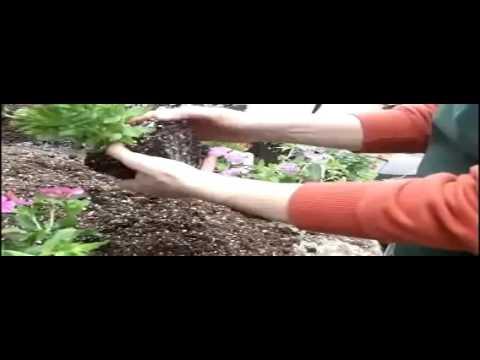 Floral Tree Gardens L Floral Tree Gardens Garden Center L Pensacola Seed And Garden Youtube