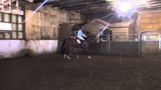 El Capone 3 year old gelding free jump and under saddle