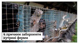 Жорстоко, брудно, не екологічно і непотрібно. Павло Вишебаба і його причини заборонити хутрові ферми