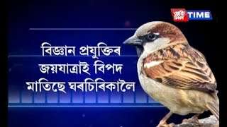 On World Sparrow Day, let's pledge to protect the species in Assam