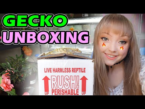 Unboxing 3 NEW GECKOS from Altitude Exotics! + COUPON CODE!