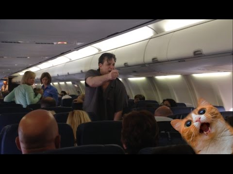 Thumbnail: Couple gets kicked off flight for being rude and their cat escapes