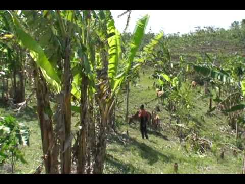 BALI, Bali Farm