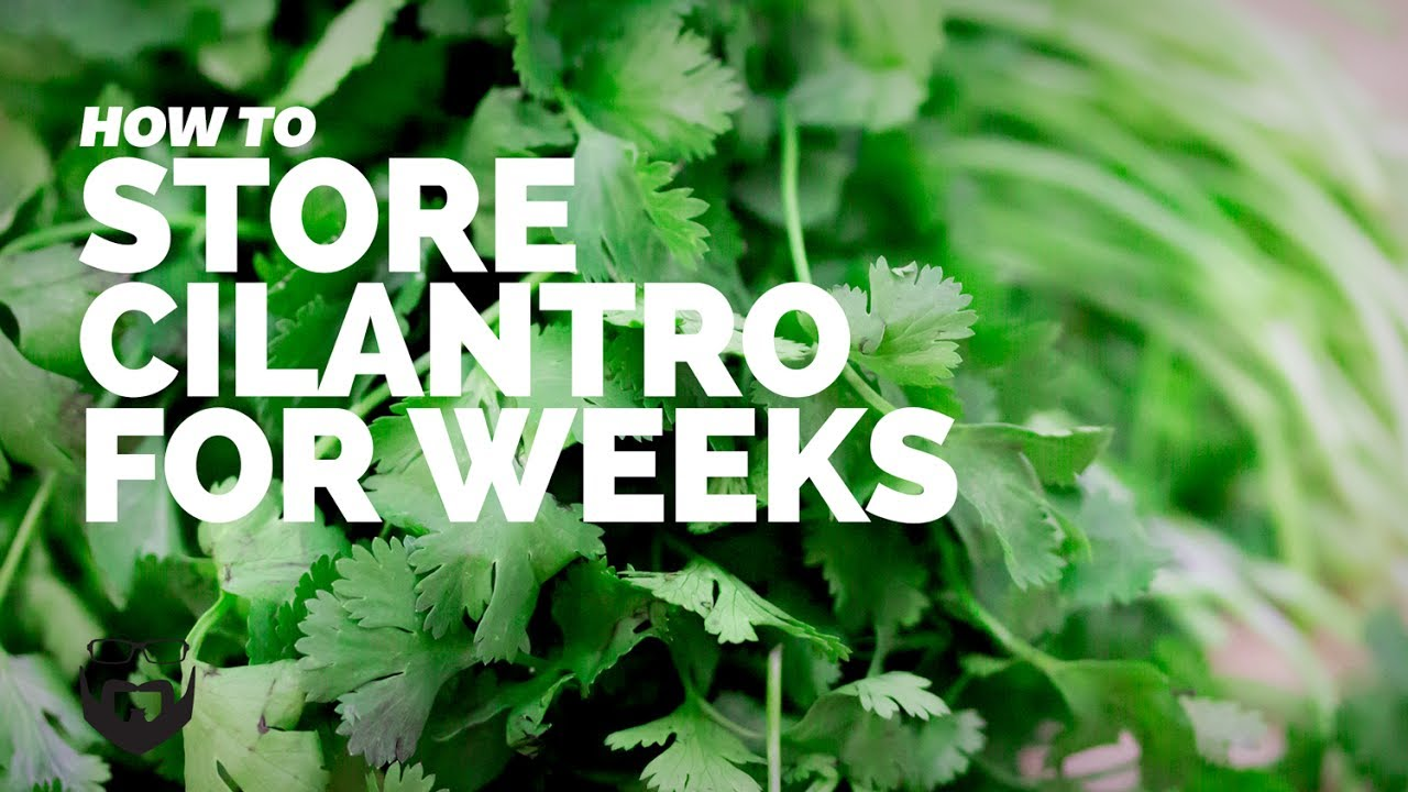 How To Store Cilantro For Weeks Youtube