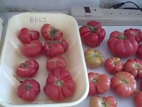 Heirloom Tomatoes - Bali
