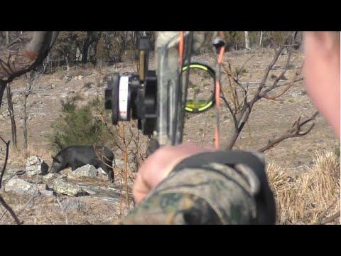 Bowhunting Pigs SLOW-MO Shots