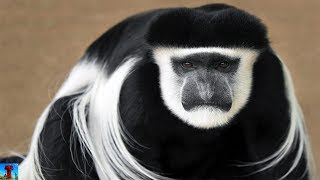 Top 10 Amazing Animals Only In Africa