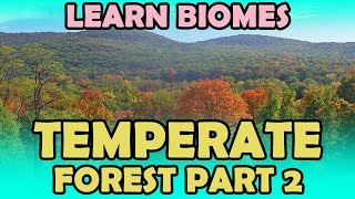 Temperate Forest - Part 2