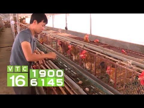 Khởi nghiệp nuôi gà đẻ trứng, lãi hơn 20 triệu mỗi tháng | VTC16