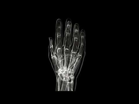 the human hand xray youtube